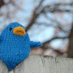 simpático pájaro azul